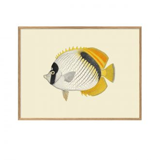 Affiche Small Fish Goes Bigger Jaune
